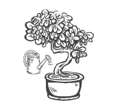 Elever et cultiver un bonsaï