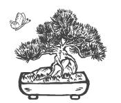 Espèces de bonsaïs les plus populaires