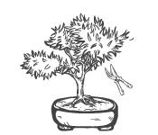 Tailler et couper un bonsaï