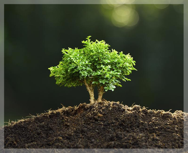 Terre a bonsai